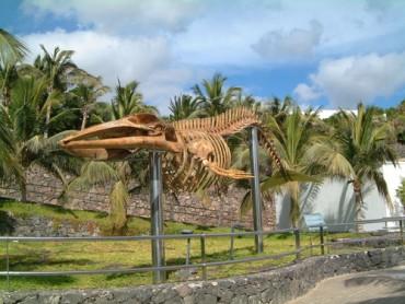 Museo de los Cetaceos Lanzarote