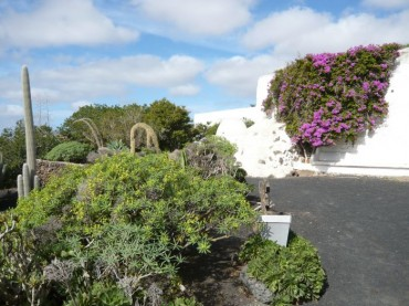 Museo dell'Agricoltura Lanzarote